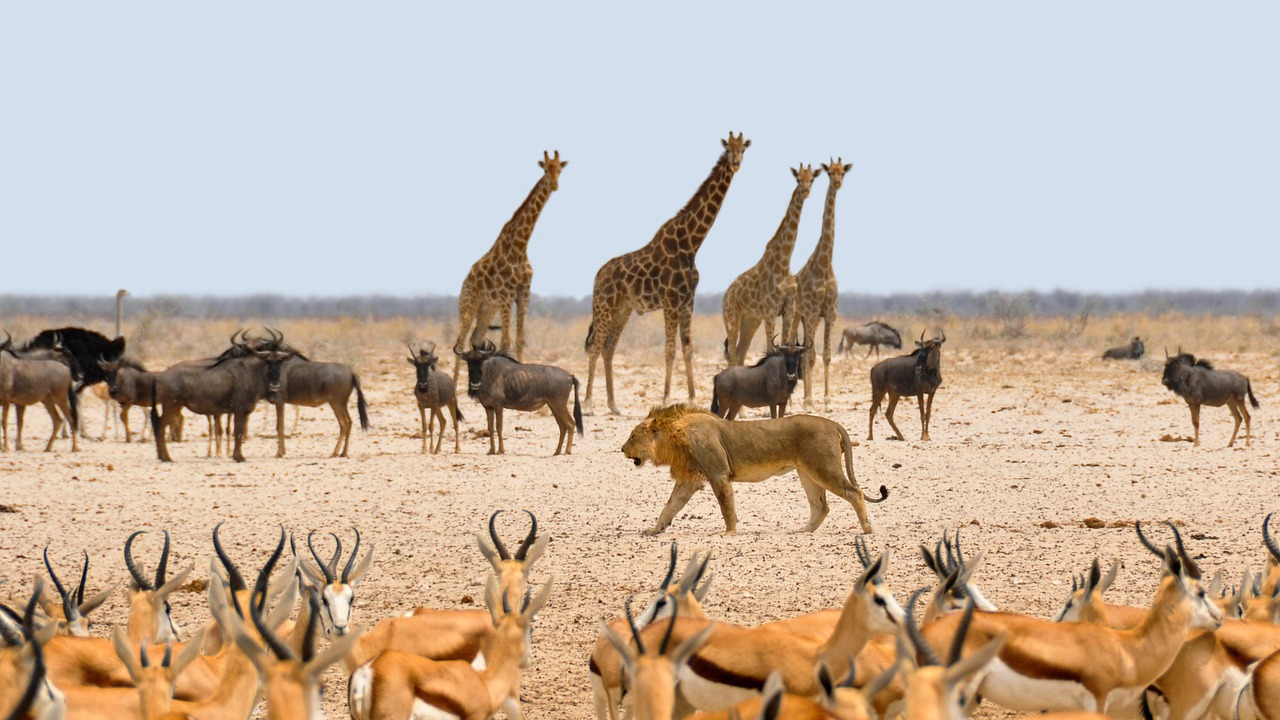 namibia-animales